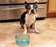 PawNosh Glass Pet Bowls http://www.pinterest.com/pin/136515432428502220/