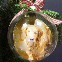 Etched Pet Photo Glass Christmas Ornament http://www.pinterest.com/pin/123426846011476159/